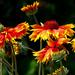 14 Lakótelepi virágok