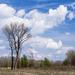 fák a Szigetközben