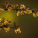borbolya