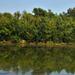 Szulai-tó délután