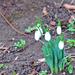 Tavasz a télben (01.24.)