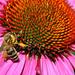Gyűjtemény - méhek
