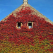 Ablak az őszre