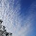 Szélfútta felhők...