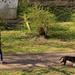 Kutyasétáltatás (2)