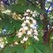 fák és virágok, lesz geszti