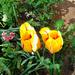 Besztercei képek, Sebaji virágok