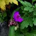 különleges növények, dideregve a kertben