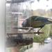 madarak, cinege hátsó