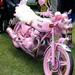 pink moci