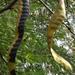 Kígyók 2.