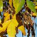 Őszi levelek 2.