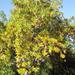 Fa őszi napsütésben