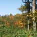 Őszi erdő 2.