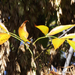 Őszi levelek 6.