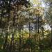 Erdő Nadap környékén