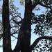 Fák között