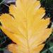 Őszi levelek 11.