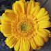 Egy virág a csokorból