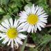 Kicsi virágok