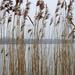 Velencei-tó (2)