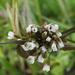 Tavaszi apróságok (4)