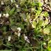 Tavaszi apróságok (1)