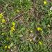 Tavaszi apróságok (11)