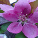 Rózsaszín ...