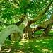 Az év fája versenyre nevezik