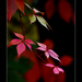 Album - Archív 2011 ősz 1