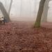 Gyűjtemény - Ködben,,,Saját fotók!
