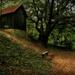 Erdő mélyén kicsi ház