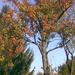 Ősz_őszi képek_szines levelek